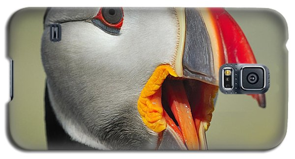 Puffin Portrait Galaxy S5 Case