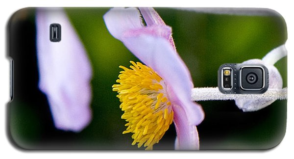 Galaxy S5 Case featuring the photograph Purple Anemone I by Michael Friedman
