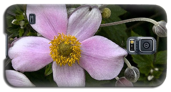 Galaxy S5 Case featuring the photograph Purple Anemone II by Michael Friedman