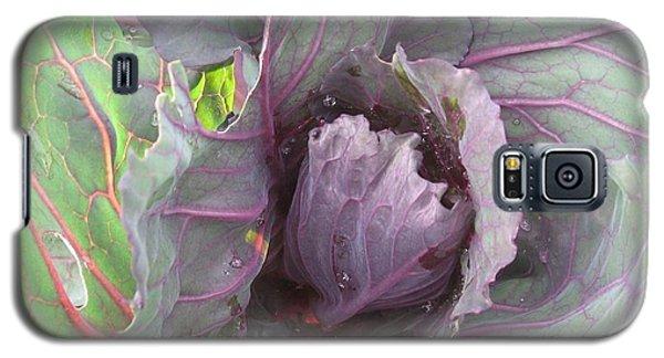 Purple Cabbage  Galaxy S5 Case