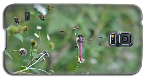 Galaxy S5 Case featuring the photograph Purple Dragon Fly by Jodi Terracina