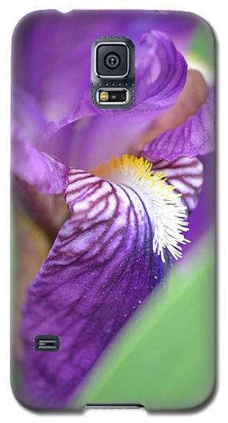 Galaxy S5 Case featuring the photograph Purple Iris by JD Grimes