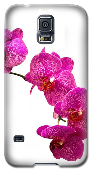 Purple Orchid On White Galaxy S5 Case