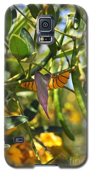 Purple Pink Green Chrysalis  Galaxy S5 Case