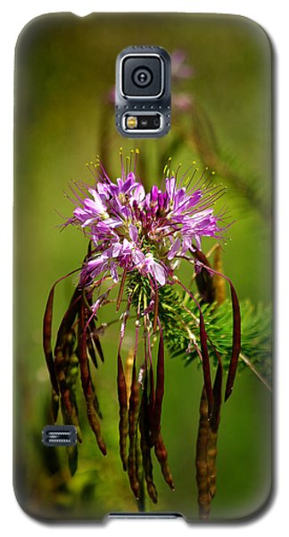 Galaxy S5 Case featuring the photograph Purple Pizzazz by Vicki Pelham