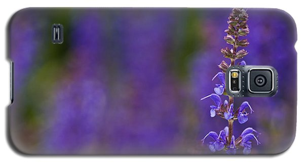 Galaxy S5 Case featuring the photograph Purple Spires by Trevor Chriss