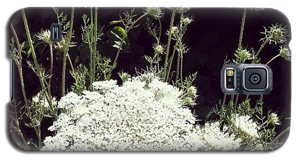 Queen Anne's Lace Galaxy S5 Case by Michelle Calkins