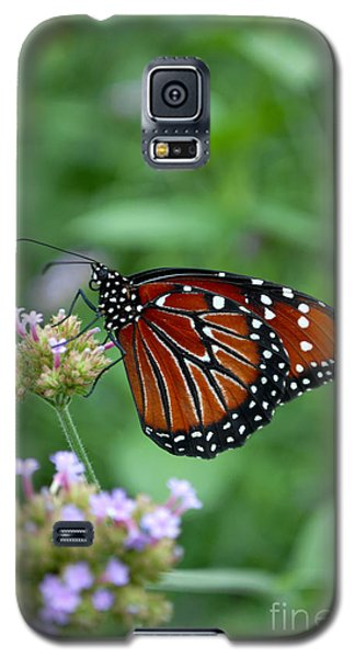 Galaxy S5 Case featuring the photograph Queen Butterfly by Eva Kaufman