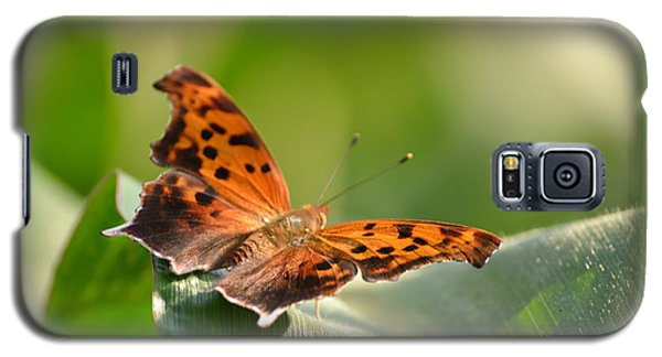 Galaxy S5 Case featuring the photograph Question Mark Butterfly by JD Grimes
