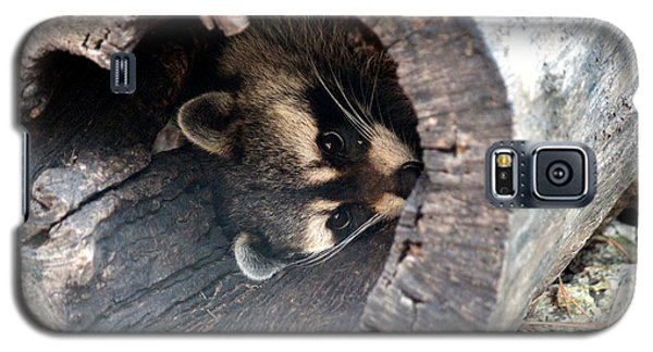 Galaxy S5 Case featuring the photograph Raccoon In Hiding by Kathy  White