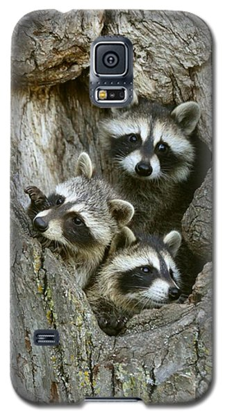 Galaxy S5 Case featuring the photograph Raccoons Peeking Out by Myrna Bradshaw
