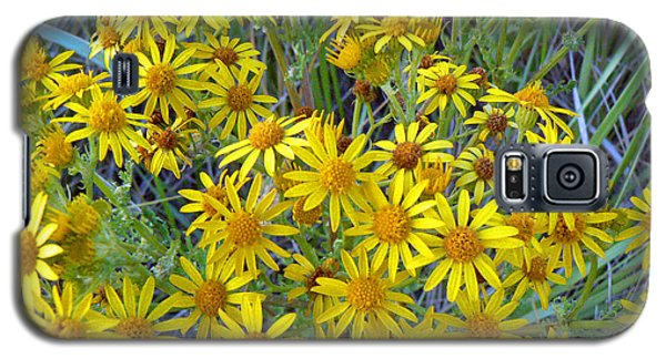 Ragwort - Tansy Galaxy S5 Case by Pamela Patch