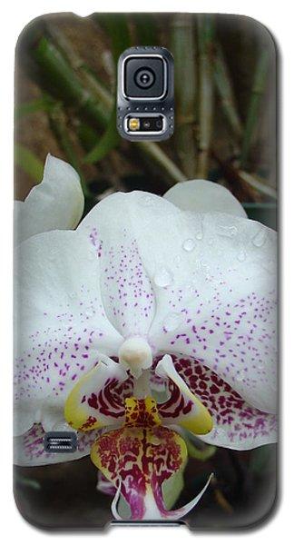 Rain Drops On Orchid Galaxy S5 Case