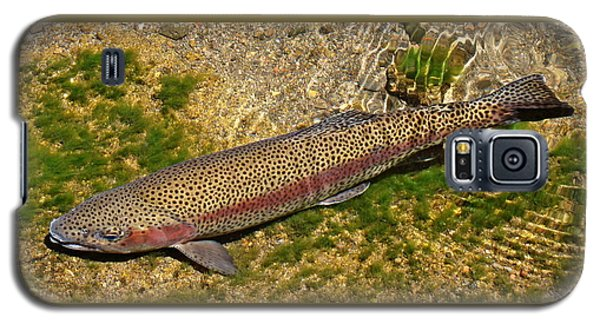 Galaxy S5 Case featuring the photograph Rainbow Trout by Nick Kloepping
