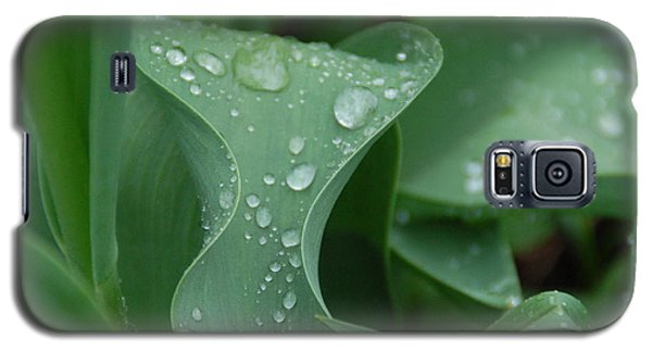 Galaxy S5 Case featuring the photograph Raindrops by Aimee L Maher Photography and Art Visit ALMGallerydotcom