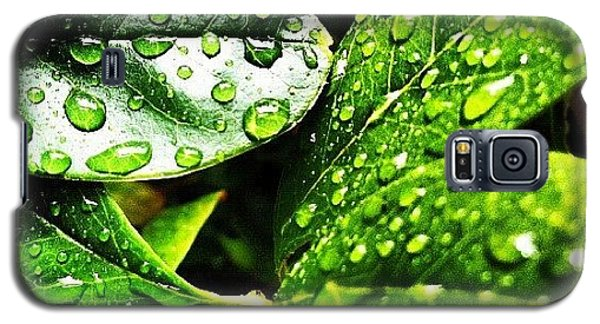Bright Galaxy S5 Case - Rainy Day by Lea Ward