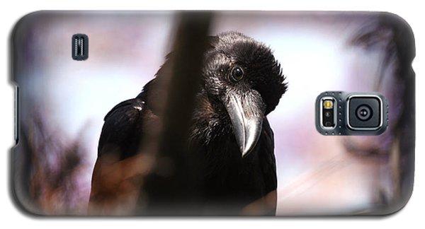 Raven Outside My Window Galaxy S5 Case