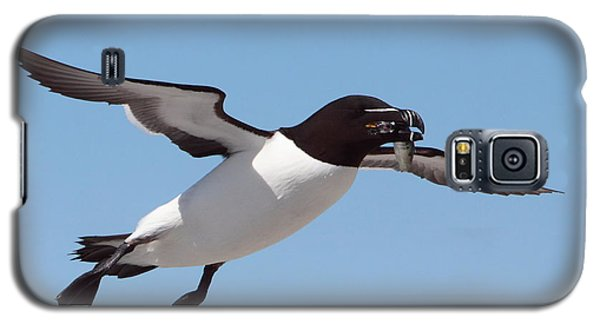 Razorbill In Flight Galaxy S5 Case