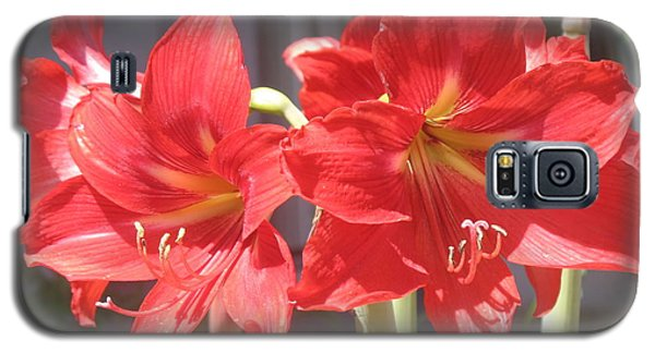 Red Amaryllis Galaxy S5 Case by Kume Bryant