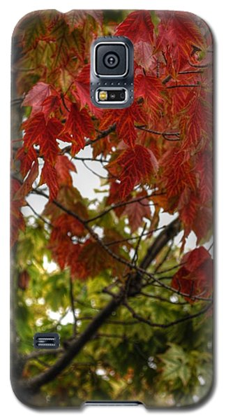 Galaxy S5 Case featuring the photograph Red And Green Prior X-mas by Michael Frank Jr