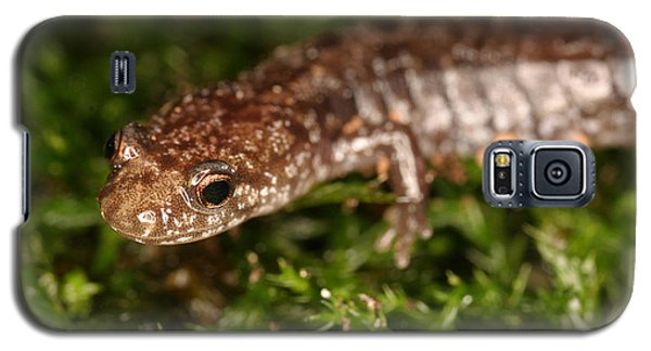 Red-backed Salamander Galaxy S5 Case by Ted Kinsman
