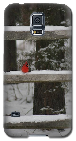 Galaxy S5 Case featuring the photograph Red Bird by Stacy C Bottoms
