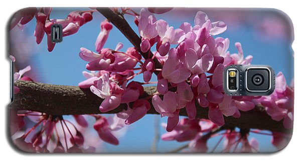 Red Bud In Bloom Galaxy S5 Case by Kathleen Holley