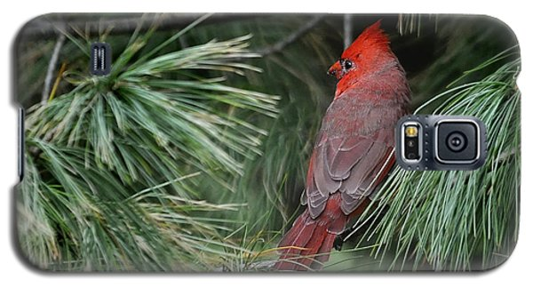 Galaxy S5 Case featuring the photograph Red Cardinal In Green Pine by Nava Thompson