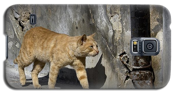 Galaxy S5 Case featuring the photograph Red Cat In Burano by Raffaella Lunelli