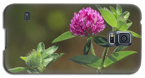 Red Clover Blossom Galaxy S5 Case
