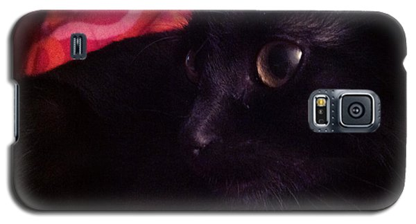 Still Life Galaxy S5 Case - Red Cover Black Cat by Mikael Andersson