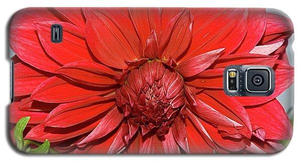Red Dalia Galaxy S5 Case