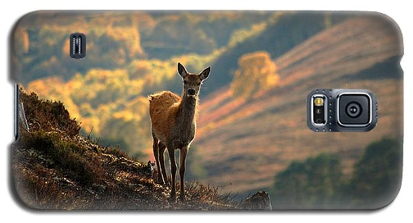 Red Deer Calf Galaxy S5 Case