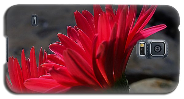 Galaxy S5 Case featuring the photograph Red English Daisy by Joe Schofield