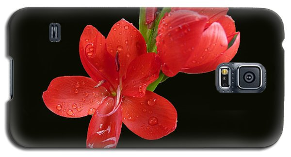 Galaxy S5 Case featuring the photograph Red Flower by Lynn Bolt