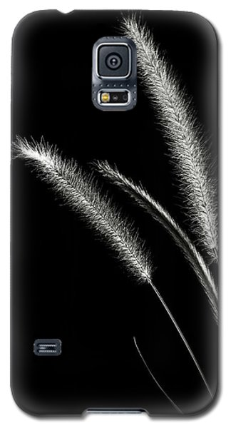 Red Fountain Grass In Black And White Galaxy S5 Case