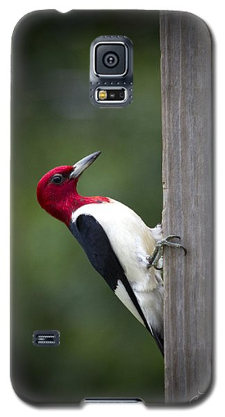 Red Headed Woodpecker Hdr - Artist Cris Hayes Galaxy S5 Case