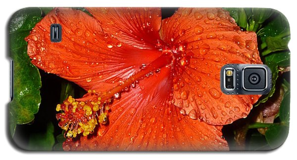 Galaxy S5 Case featuring the photograph Red Hibiscus After The Rain by Renee Trenholm