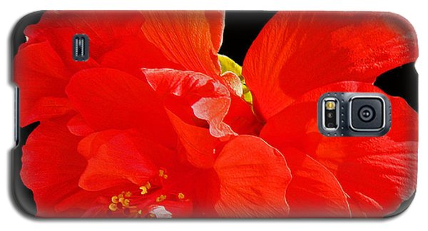 Galaxy S5 Case featuring the photograph Red Hibiscus by Cindy Manero