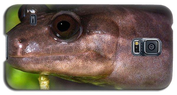 Red Hills Salamander Galaxy S5 Case by Dant� Fenolio