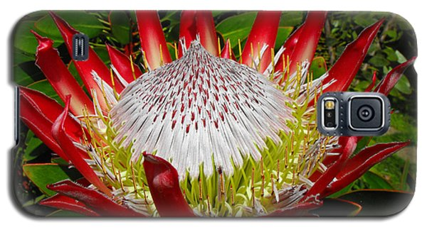 Red King Protea Galaxy S5 Case