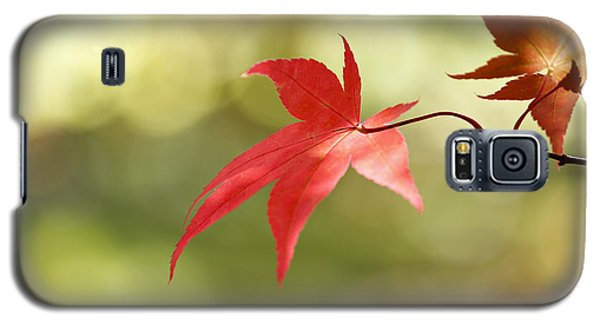 Galaxy S5 Case featuring the photograph Red Leaf. by Clare Bambers