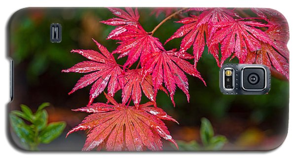 Red Maple Season Galaxy S5 Case by Ken Stanback
