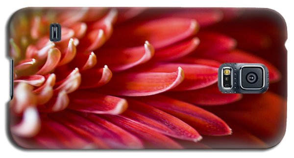 Red Petals Abstract 1 Galaxy S5 Case