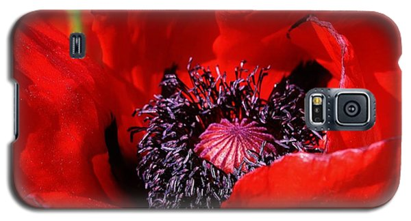 Red Poppy Close Up Galaxy S5 Case