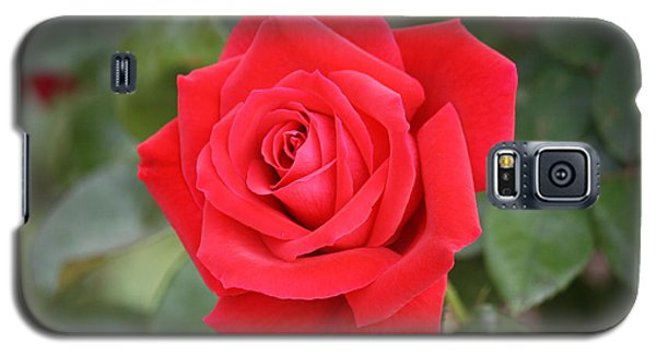 Galaxy S5 Case featuring the photograph Red Rose by Donna  Smith