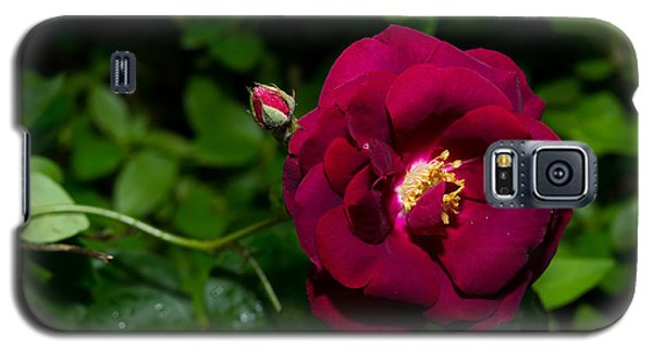 Red Rose In The Wild Galaxy S5 Case