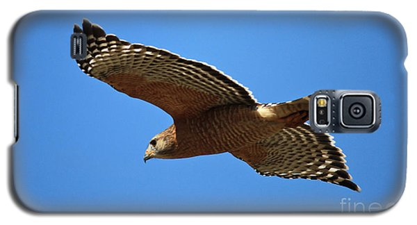 Red Shouldered Hawk In Flight Galaxy S5 Case