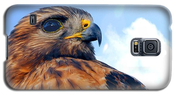 Galaxy S5 Case featuring the photograph Red Shouldered Hawk Portrait by Dan Friend