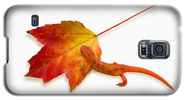 Red Spotted Newt Galaxy S5 Case by Ron Jones